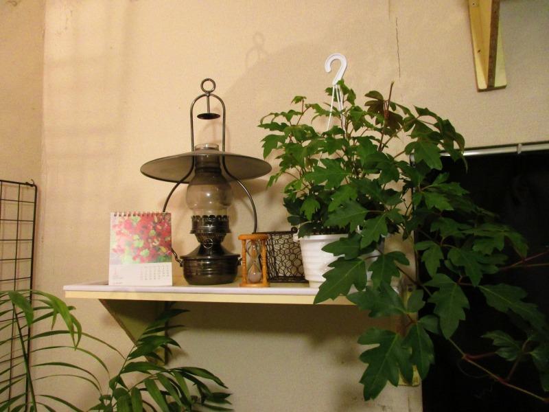 植物「Vine」_b0362459_21295951.jpg