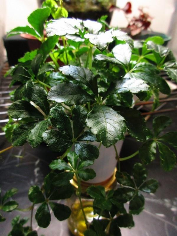 植物「Vine」_b0362459_21400070.jpg