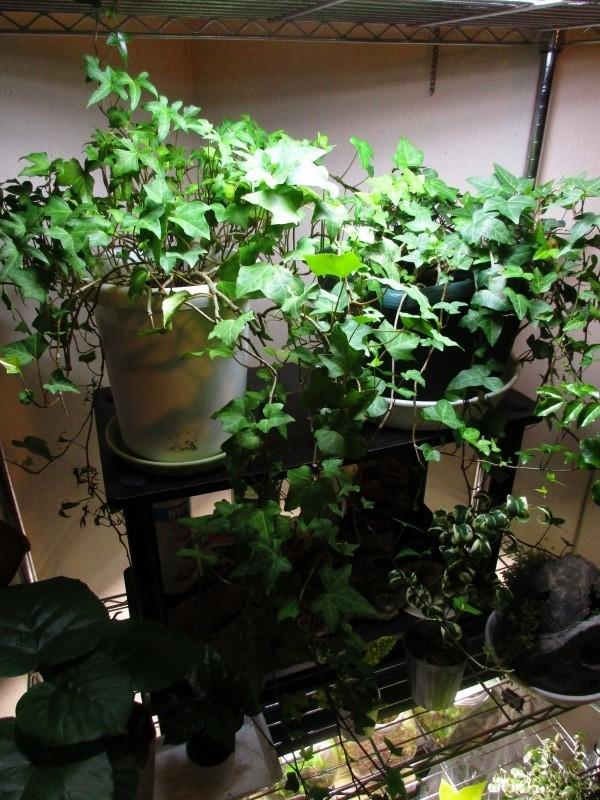 植物「Vine」_b0362459_21410291.jpg