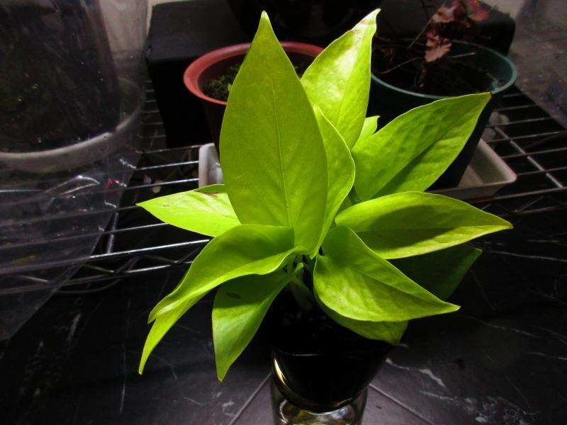 植物「Vine」_b0362459_21421505.jpg