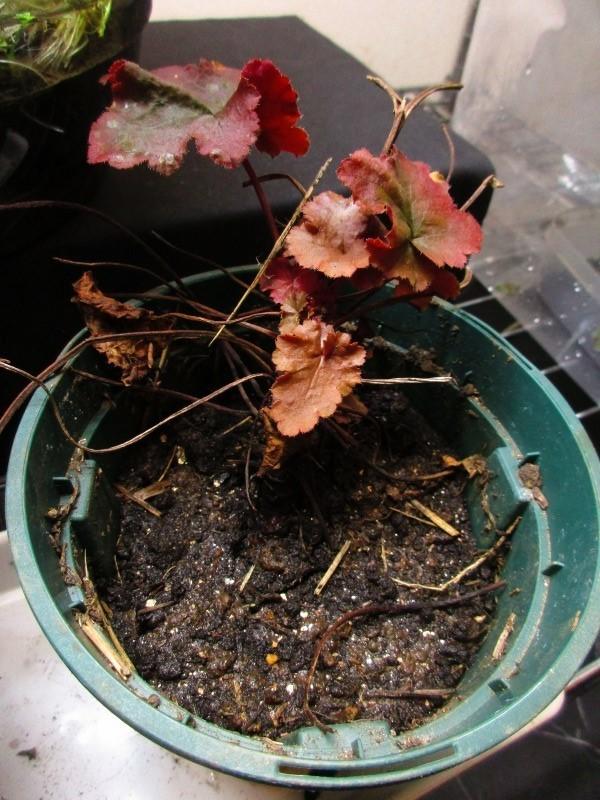 植物「Vine」_b0362459_21431635.jpg