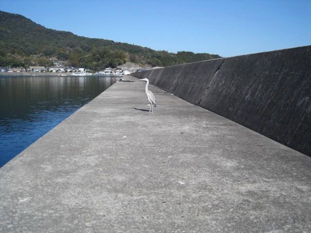 天草大多尾漁港へアラカブ釣りに行く _a0278866_1202189.jpg
