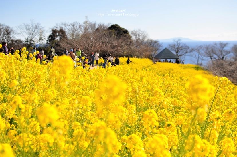 海と菜の花と富士山と。_e0359481_08471939.jpg