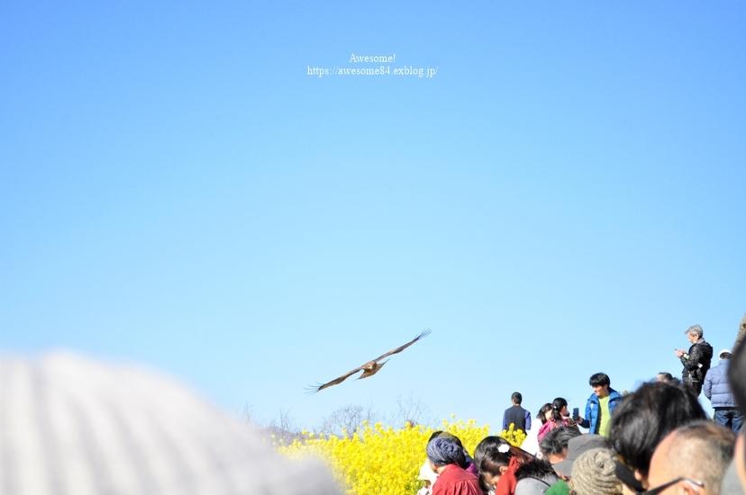 吾妻山公園 -vol.2-_e0359481_08492962.jpg