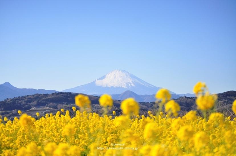 海と菜の花と富士山と。_e0359481_08514786.jpg