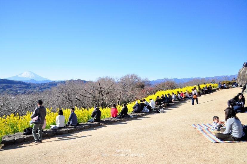 吾妻山公園 -vol.2-_e0359481_08565586.jpg