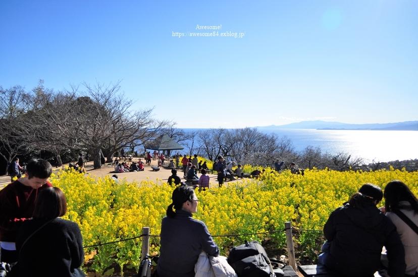 吾妻山公園 -vol.2-_e0359481_08570147.jpg