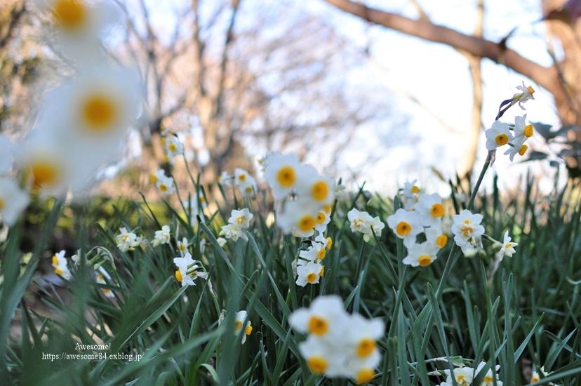 吾妻山公園 -vol.2-_e0359481_08590342.jpg