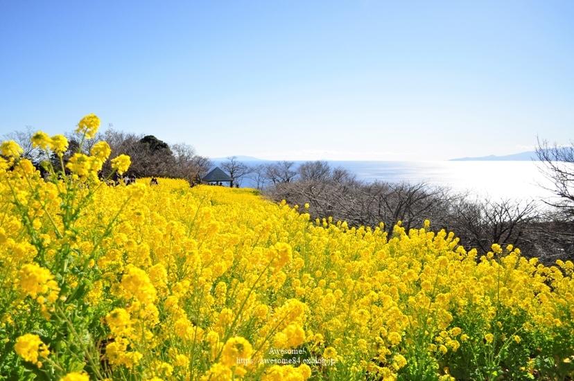 海と菜の花と富士山と。_e0359481_09571707.jpg