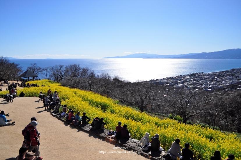 海と菜の花と富士山と。_e0359481_11072643.jpg