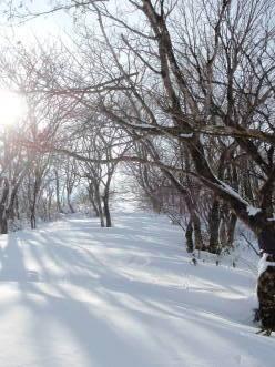 名倉山でスノーシュー_a0096989_19385365.jpg