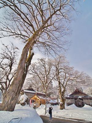 昨日も「雪の花」がきれいでした_c0336902_18100308.jpg