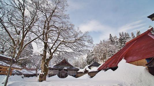 昨日も「雪の花」がきれいでした_c0336902_18100632.jpg