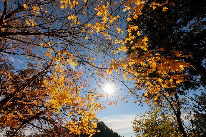 天空のもみじの山へ「御岳山~日の出山」長尾平_c0369219_14515880.jpg