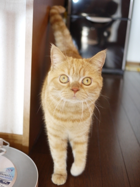 猫のお留守番 みかんちゃん編。_a0143140_22063446.jpg