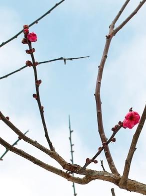 赤いポストと梅は咲いたか・・・あっと高島、いっと大阪_d0005250_16303097.jpg