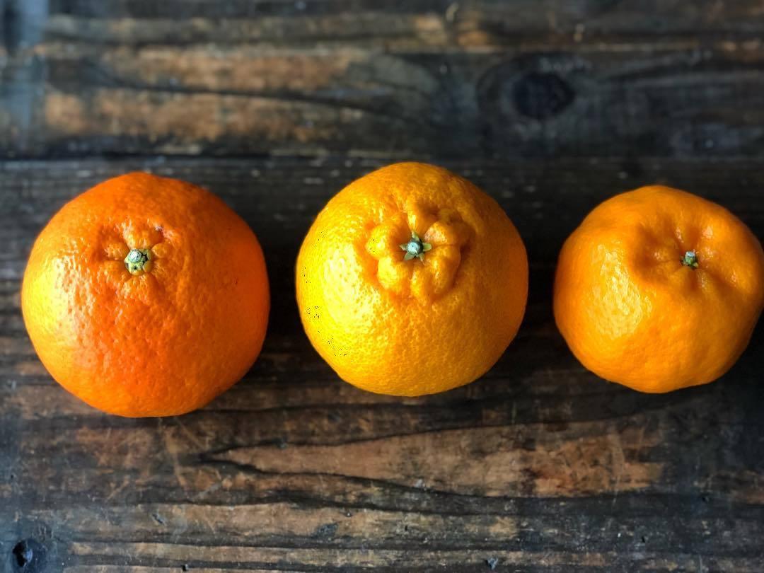 My favorite Japanese citrus_b0117564_19481956.jpg