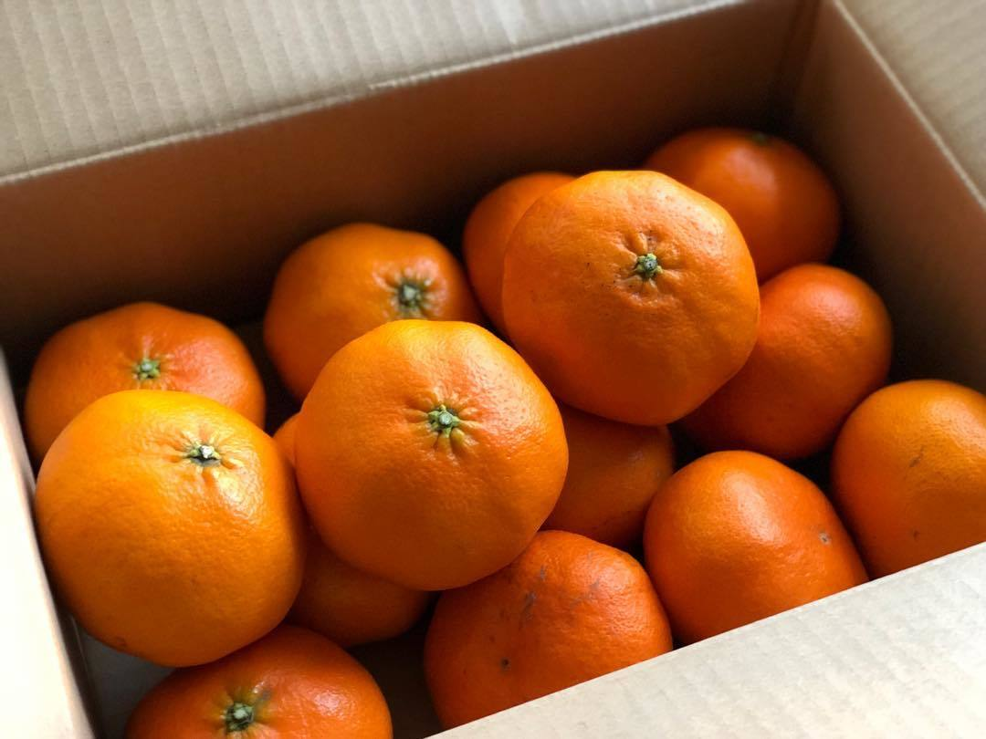 My favorite Japanese citrus_b0117564_19482398.jpg