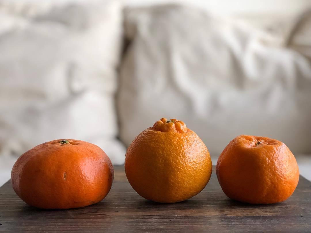 My favorite Japanese citrus_b0117564_19482912.jpg