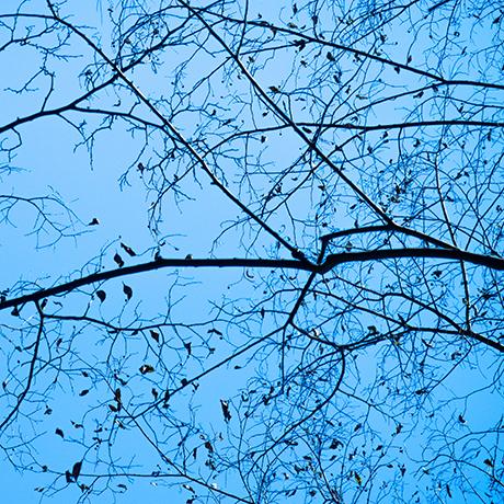 森の冬・点景。_b0022268_19093971.jpg
