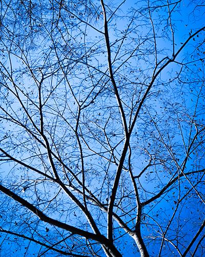 森の冬・点景。_b0022268_19512508.jpg