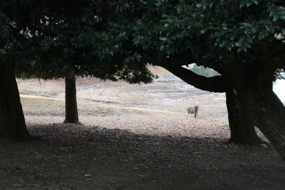 (番外編)東大寺に行ってちゃんとした写真を撮ろうとした記事_c0001670_19490992.jpg