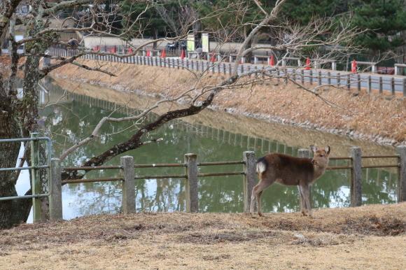 (番外編)東大寺に行ってちゃんとした写真を撮ろうとした記事_c0001670_19494981.jpg