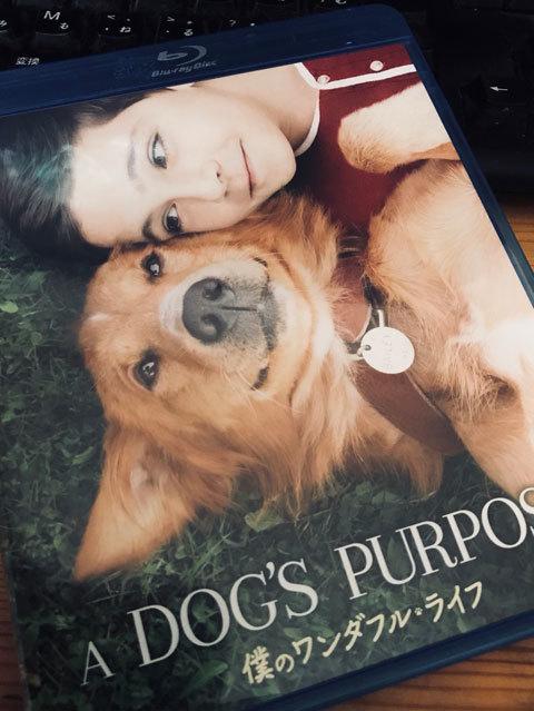 A Dog\'s Purpose / 僕のワンダフルライフ_a0342172_13483961.jpg
