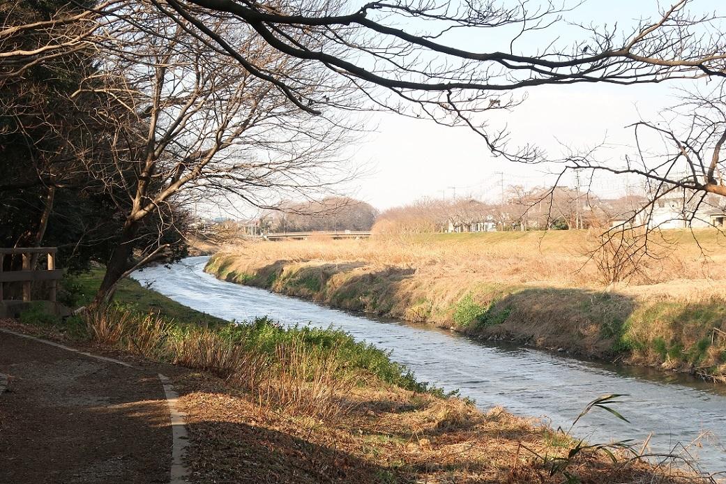 新河岸川沿いの遊歩道 ~野草園~_a0107574_14380463.jpg