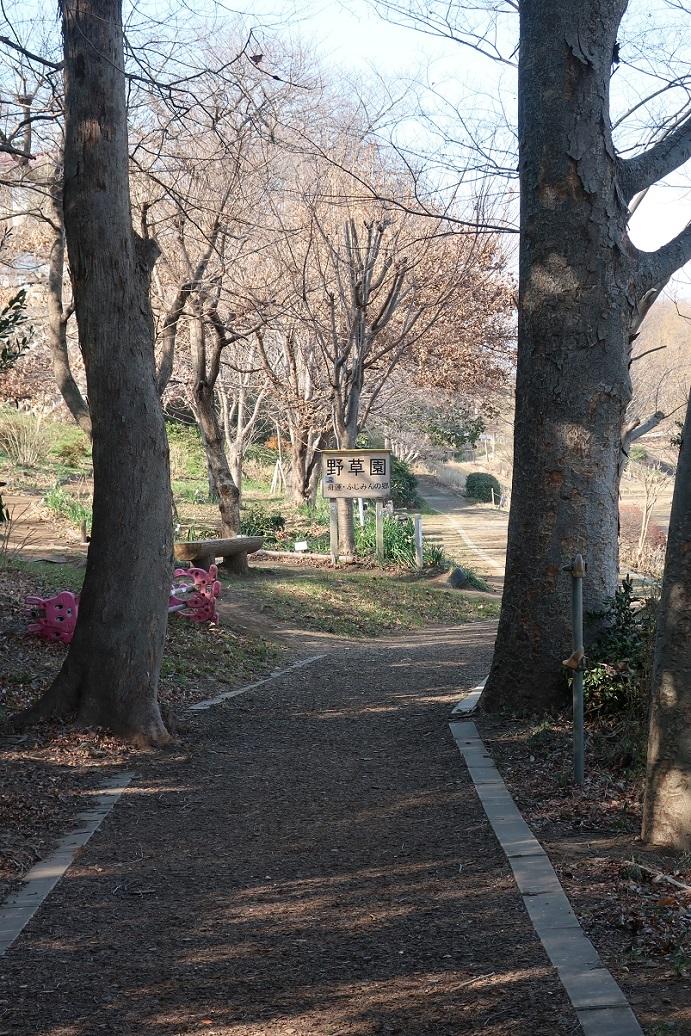 新河岸川沿いの遊歩道 ~野草園~_a0107574_14382362.jpg