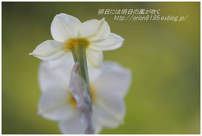 f0361079_16550326.jpg