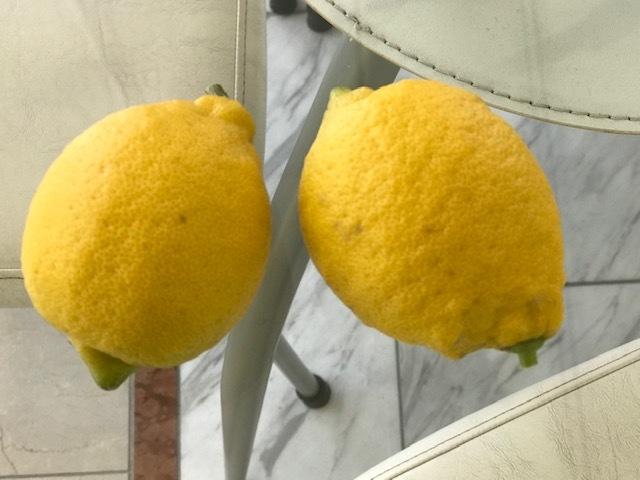 !!レモンの収穫!!_b0263390_15585410.jpg