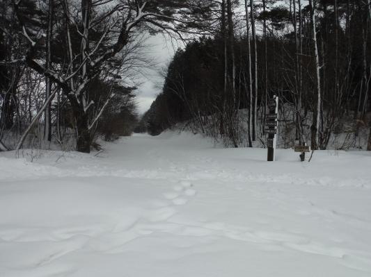 雪行ってきました!_c0132901_20411684.jpg
