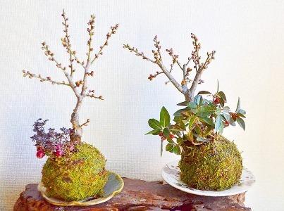 新春盆栽展ありがとうございました_d0263815_19211253.jpg