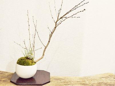 新春盆栽展ありがとうございました_d0263815_19304560.jpg