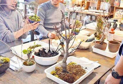 新春盆栽展ありがとうございました_d0263815_19355783.jpg