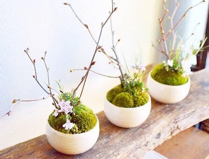 新春盆栽展ありがとうございました_d0263815_20022414.jpg