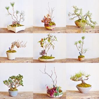 新春盆栽展ありがとうございました_d0263815_20131747.jpg