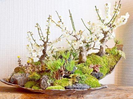 新春盆栽展ありがとうございました_d0263815_20192128.jpg