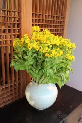花だより 菜の花_a0279848_16052212.jpg