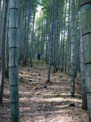 幻の白い「長生たけのこ」 徹底管理のたけのこ畑で毎年至高のたけのこを育てる匠(伐採作業2019その2)_a0254656_19315290.jpg