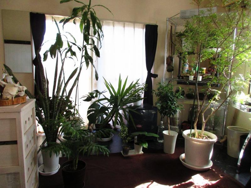 植物「支柱」_b0362459_13075538.jpg