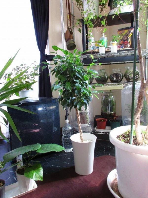 植物「お分かりいただけただろうか……(Replay.....」_b0362459_13104647.jpg