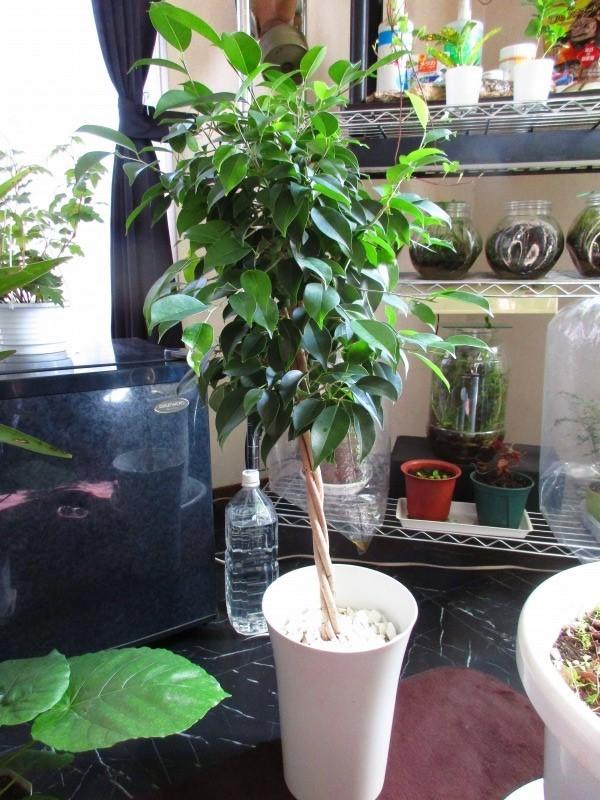 植物「お分かりいただけただろうか……(Replay.....」_b0362459_13151813.jpg