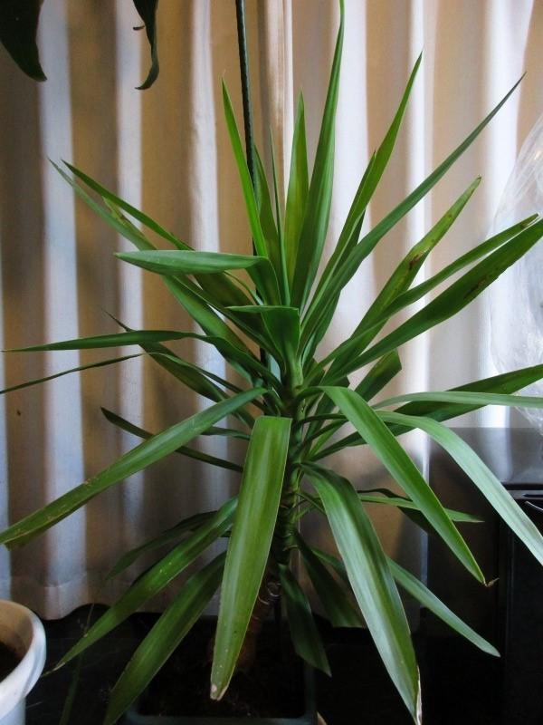 植物「支柱」_b0362459_21530627.jpg