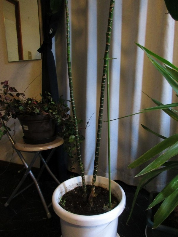 植物「支柱」_b0362459_21550059.jpg