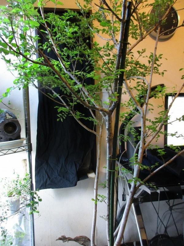 植物「支柱」_b0362459_21571127.jpg