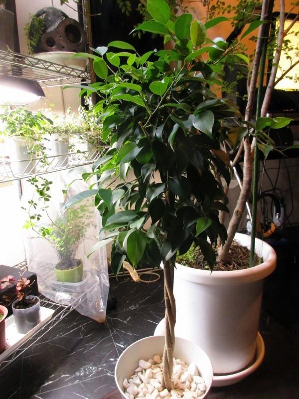 植物「支柱」_b0362459_22004405.jpg