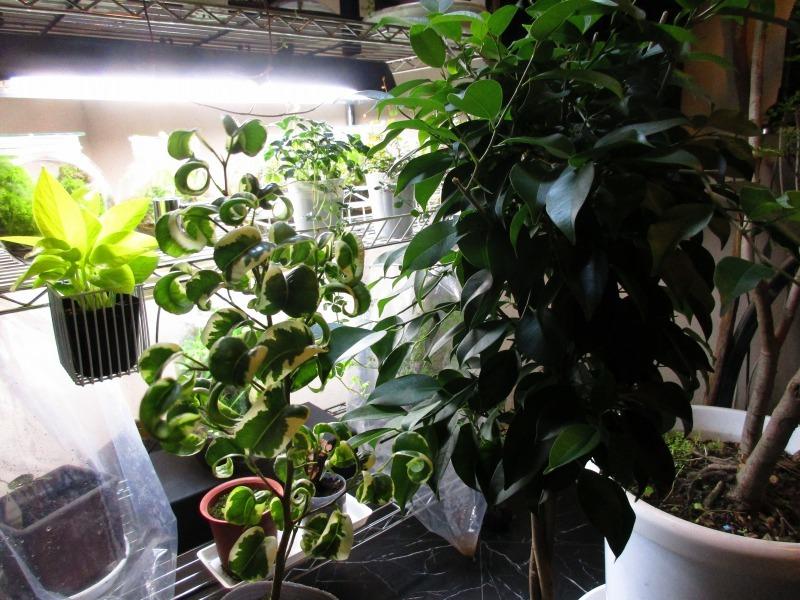 植物「支柱」_b0362459_22081887.jpg