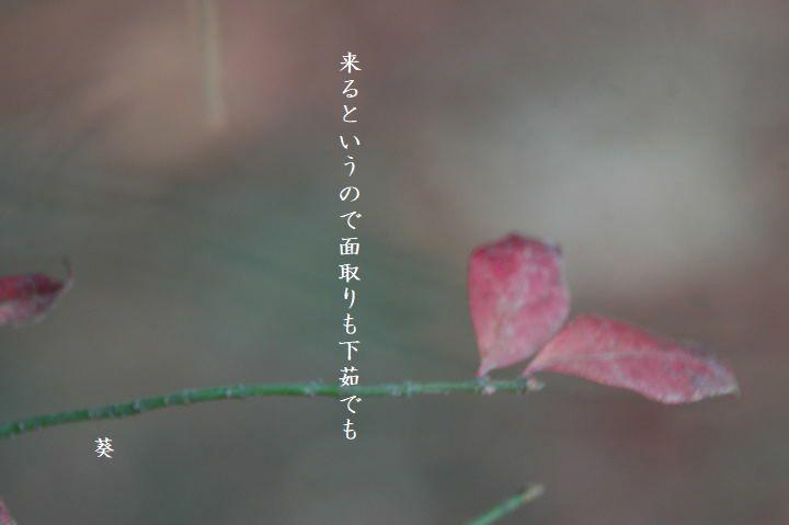 f0379160_16375366.jpg